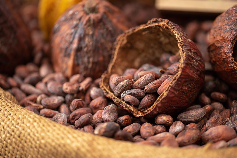 Read more about the article Le Bean-to-Bar : une expérience gustative unique